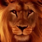 thelion22's profile image