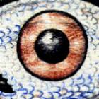 wormword's profile image