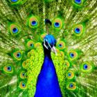 kheikhoe Avatar image