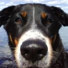 derdeutsche's profile image