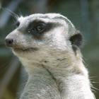 chuppafuppa's profile image